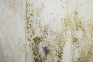 preventing mold in home
