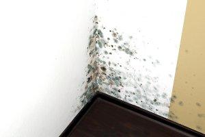 Mold Remediation Company Baltimore